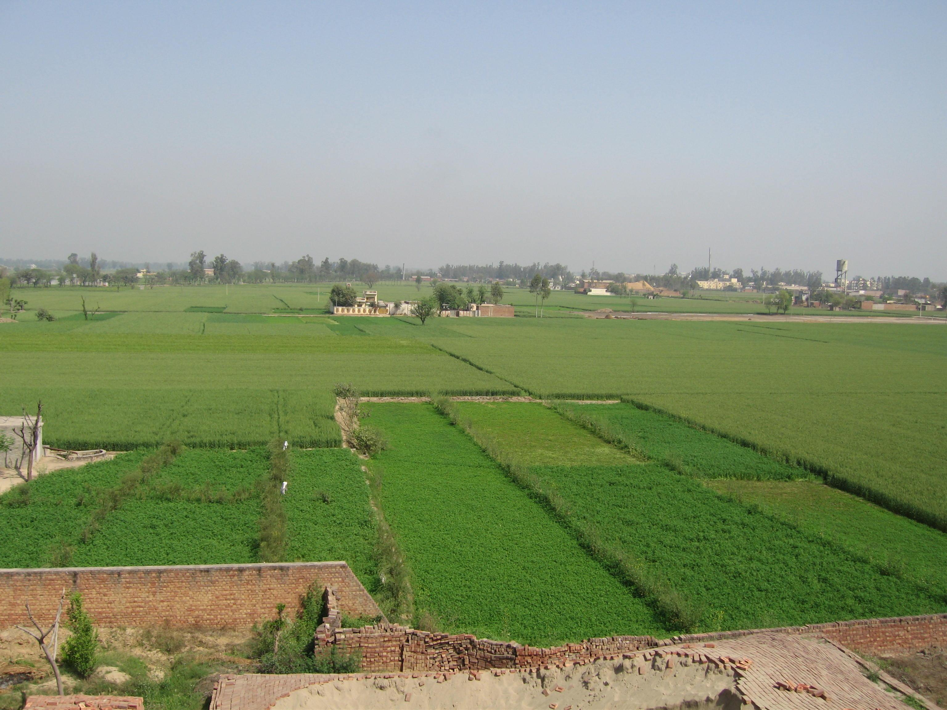 Agriculture_in_Punjab_India